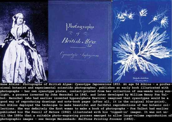 atkins-cyanotypes_c